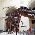 シカゴのフィールド自然史博物館は一度は見る価値ありですーアメリカ駐在観光記⑥