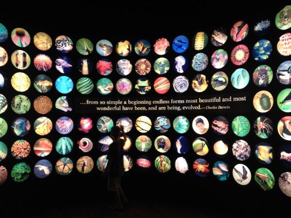 chicago field museum2