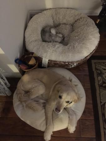 コストコでペット用ベッド